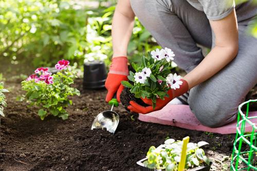 癒やしの庭造りイメージ画像